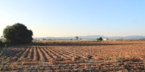 rural, despoboamento, A Limia, agricultura, ordenación do territorio, solo